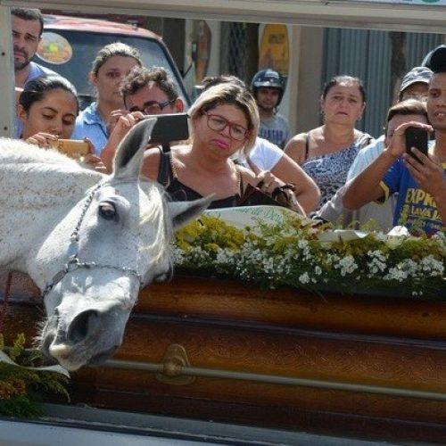 Cavalo causa comoção ao se despedir de vaqueiro morto com cabeça sobre o caixão