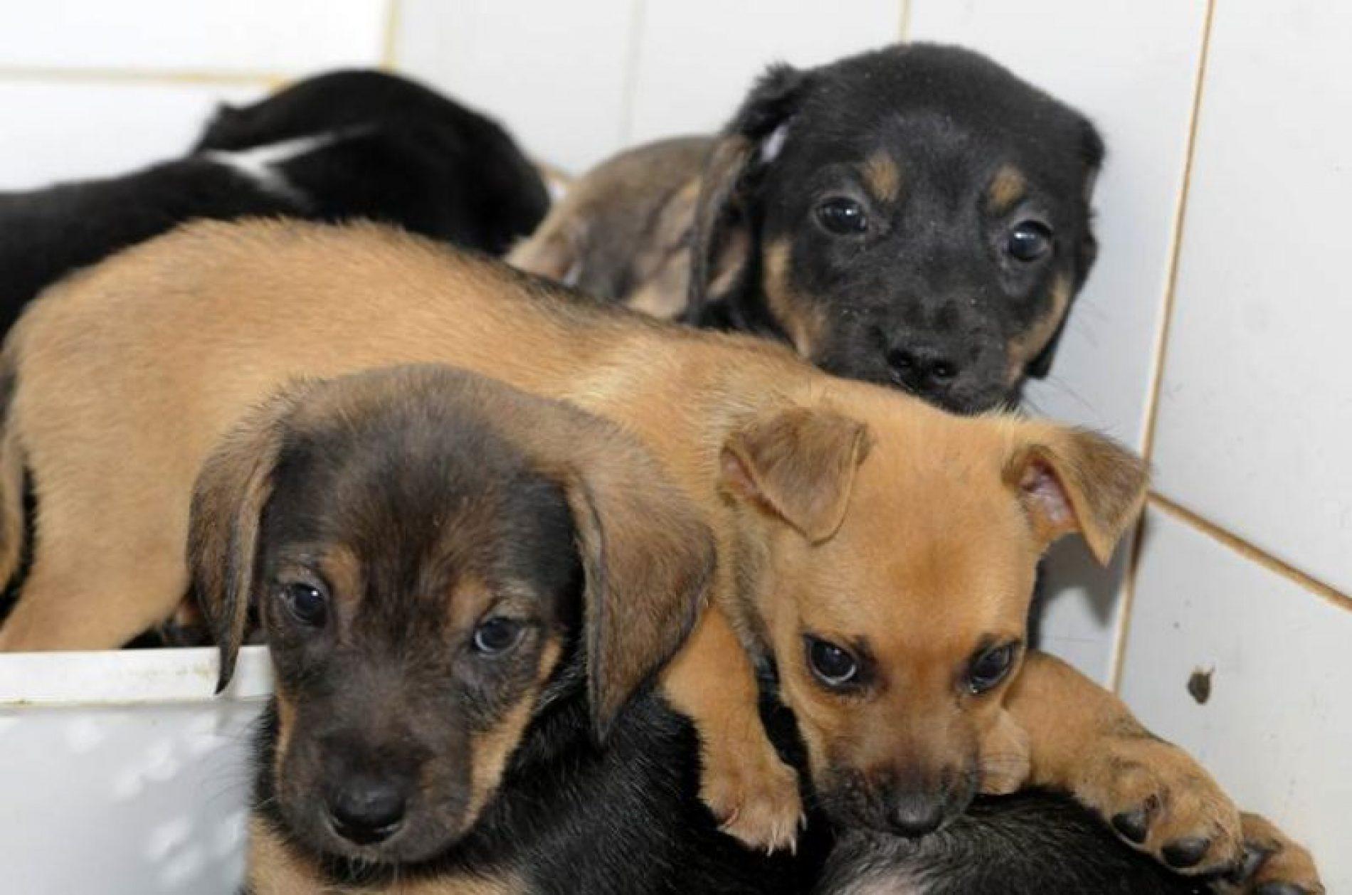 Câmara aprova regras de controle populacional de cães e gatos