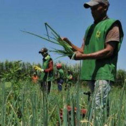Governo brasileiro vai apoiar agricultura familiar na Colômbia