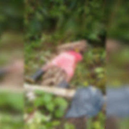 Homem matou companheira após ela descobrir abuso contra filha de 12 anos em Ibirapitanga