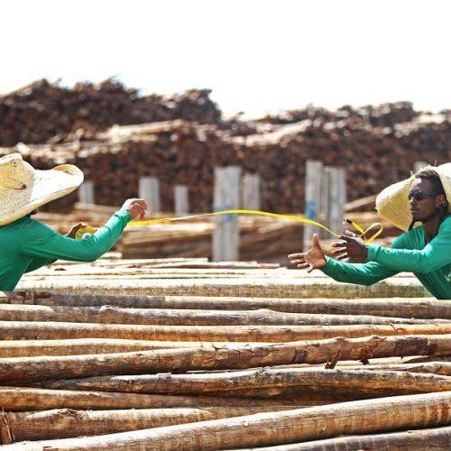 Produção de papel e celulose na Bahia cresce mais de 40%