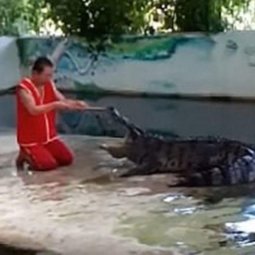 Impressionante! Funcionário de zoo coloca cabeça em boca de crocodilo e o pior ocorre; assista