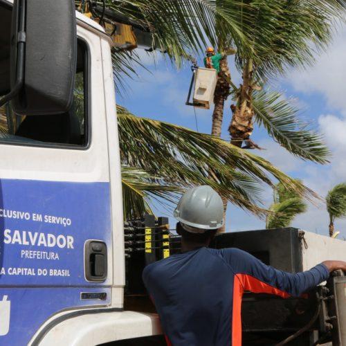 Prefeitura realiza poda de coqueiros na orla marítima de Salvador