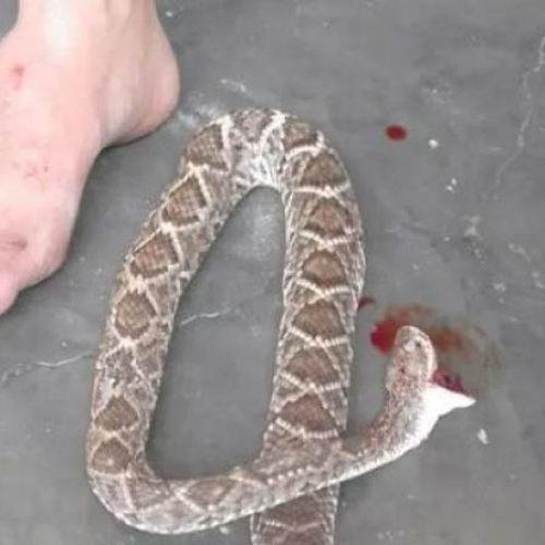 Homem é picado por cobra e mata o animal com mordida na cabeça
