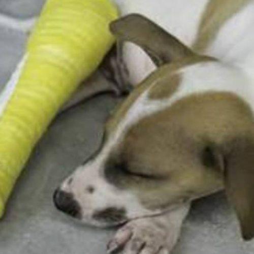 Vitória da Conquista: Homem é preso após 'quebrar' perna do cachorro do vizinho