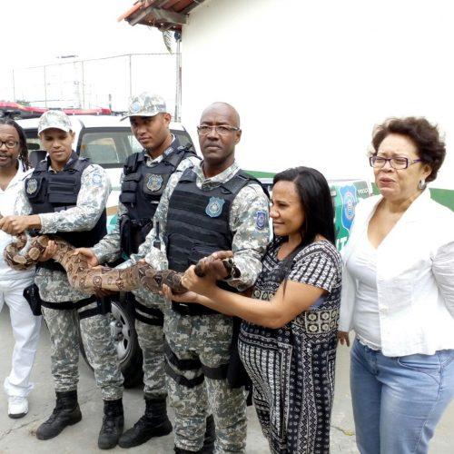 Jiboia é capturada em escola pela Guarda Municipal