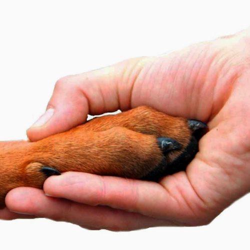 Animais atuam como terapeutas no tratamento de doenças; assista