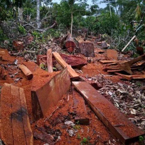 Ipiaú: Operação apreende grande quantidade de madeira extraída ilegalmente em fazendas