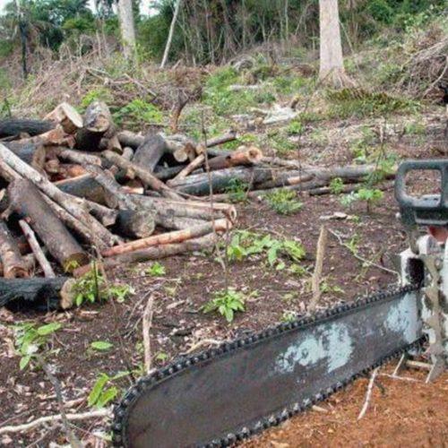 MPF move 757 ações contra desmate na Amazônia