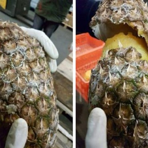 Espanha e Portugal apreendem 745kg de cocaína em abacaxis