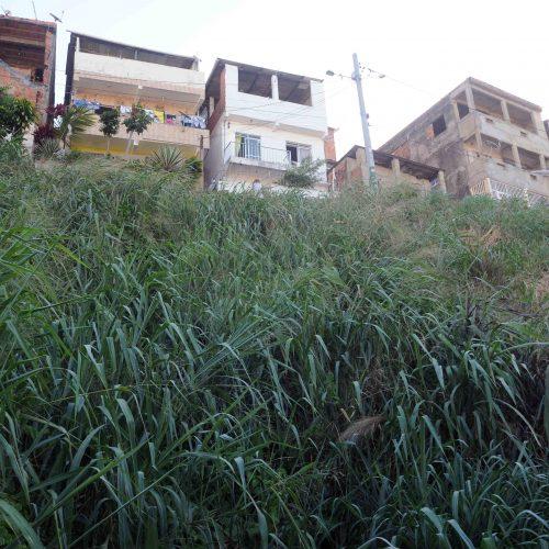 Salvador: Prefeitura autoriza instalação de geomanta em Cosme de Farias nesta quinta
