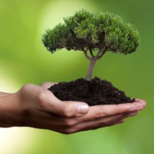 Câmara aprova MP que cria fundo com recursos de compensação ambiental