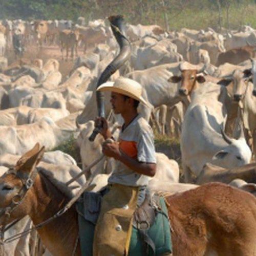 Abate de bovinos cresce 1,4% no primeiro trimestre, diz IBGE