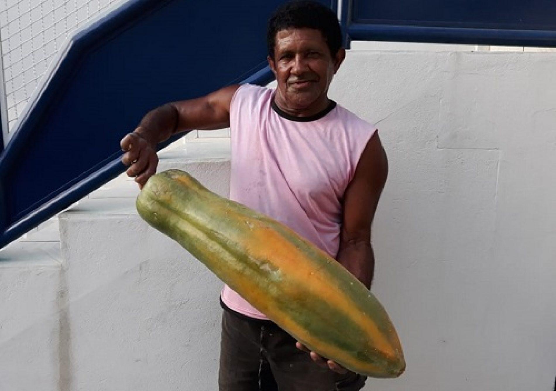 Lavrador colhe mamão de quase 8kg em Livramento de Nossa Senhora