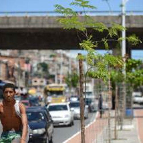 Suburbana Verde alcança a marca de mil árvores plantadas