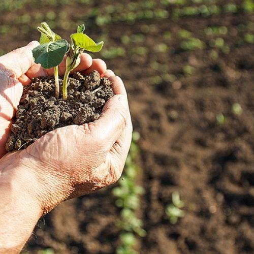 Termina prazo de adesão ao Programa de Regularização Tributária Rural