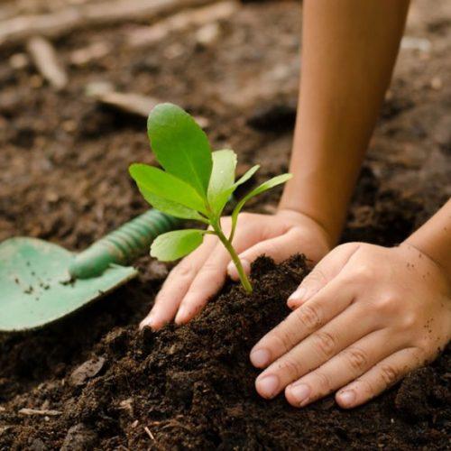 Salvador: Dia do Meio Ambiente será comemorado com plantio e distribuição de mudas
