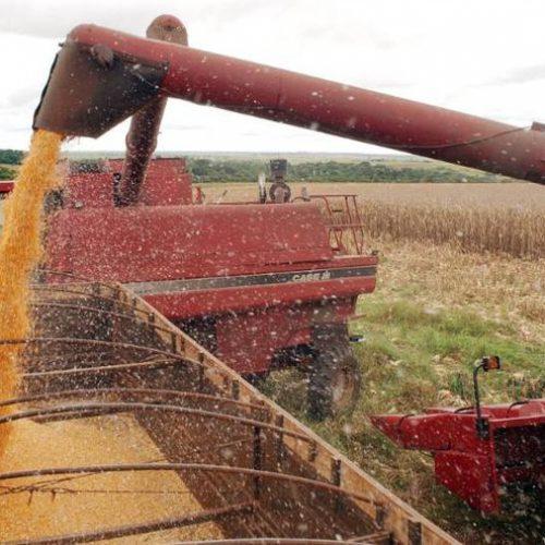 IBGE reduz para 228,1 milhões de toneladas previsão de safra de grãos