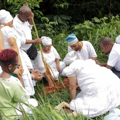 Salvador ganha primeiro jardim etnobotânico em local sagrado para o candomblé
