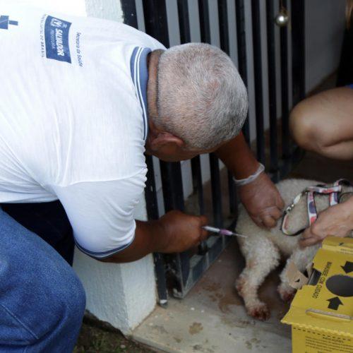 Campanha de vacinação animal é iniciada em 104 postos de Salvador