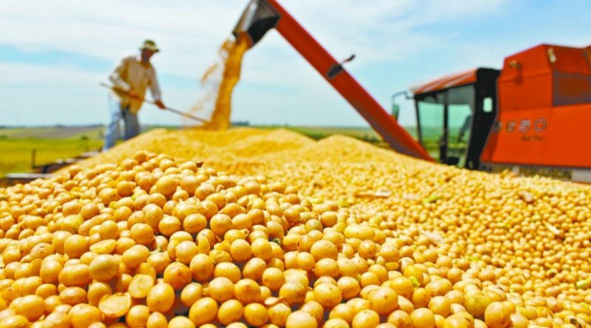 IBGE estima redução de 5,3% na safra de grãos deste ano