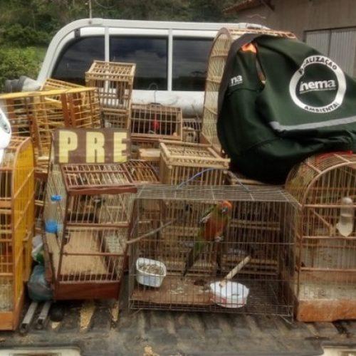Operação da PRE e Inema apreende aves silvestres entre os municípios de Jitaúna e Ipiaú