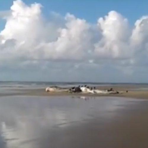Baleia é achada morta em praia de Ilhéus