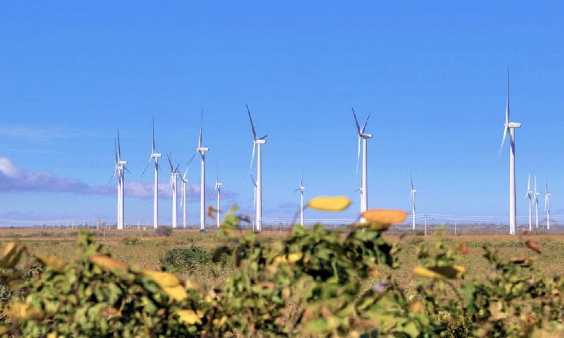 Potencial para geração de energia eólica no Brasil é crescente